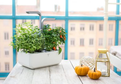 Top 4 Reasons To Start an Indoor Garden