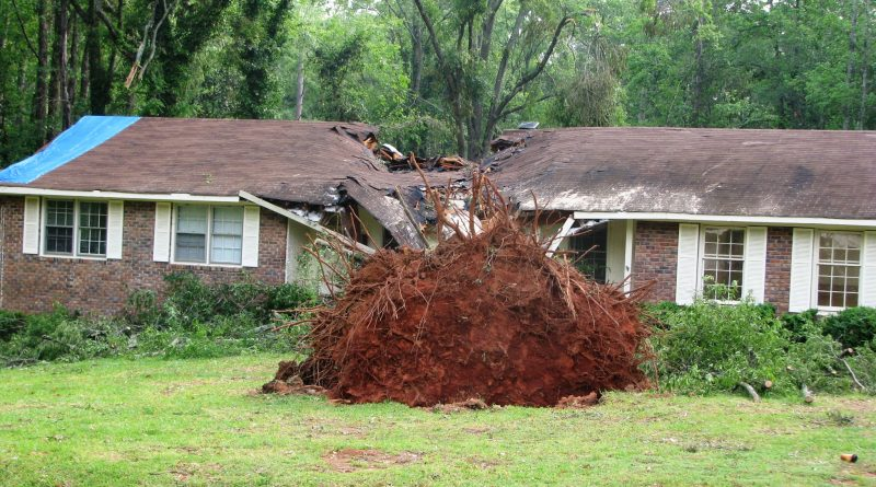 What to do if a tree falls on your property?